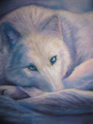 beautiful blue white wolf - photo #35
